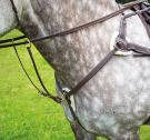 Shires 285 Salisbury 5 Point Breastplate