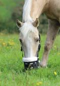Shires 495NF Deluxe Grazing Muzzle