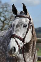 A selection of tack such as bridles, martingales and reins